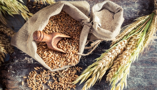 Food grain demand in India will reach 355 million tonnes in 2030