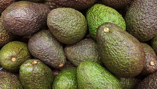Global avocado market: Colombia reaping the fruits of success