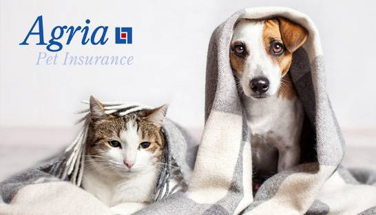 Agria Pet Insurance hires Crossword for cybersecurity consultancy