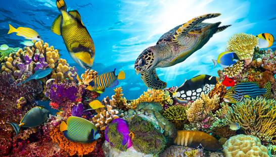 Accenture's smart technology to enable coral reef conservation