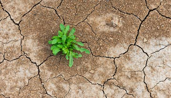 Deloitte wins bid for Drought Resilience Self-Assessment Tool