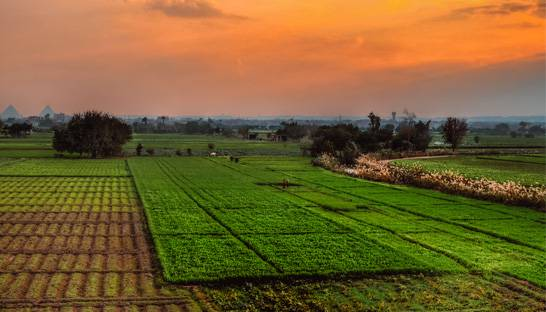 BCG roped in to support agricultural reforms in Egypt
